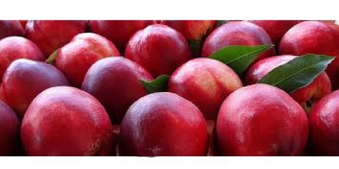 Δωρεάν διανομή φρούτων (νεκταρίνια)