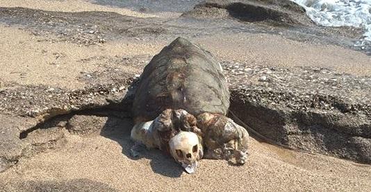 Νεκρή καρέτα καρέτα ξεβράστηκε στην Γύρα