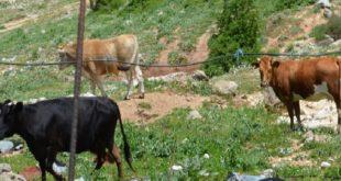 Συνάντηση στην Καρυά για τα ανεπιτήρητα ζώα