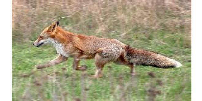 Η παραβολή της ημέρας: Το κοτόπουλο κι η αλεπού