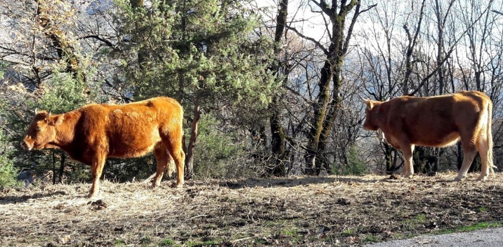 Άρχισαν οι μηνύσεις για τα ανεπιτήρητα παραγωγικά ζώα