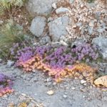 Ένα ακόμα έργο τέχνης της Λευκαδίτικης χλωρίδας