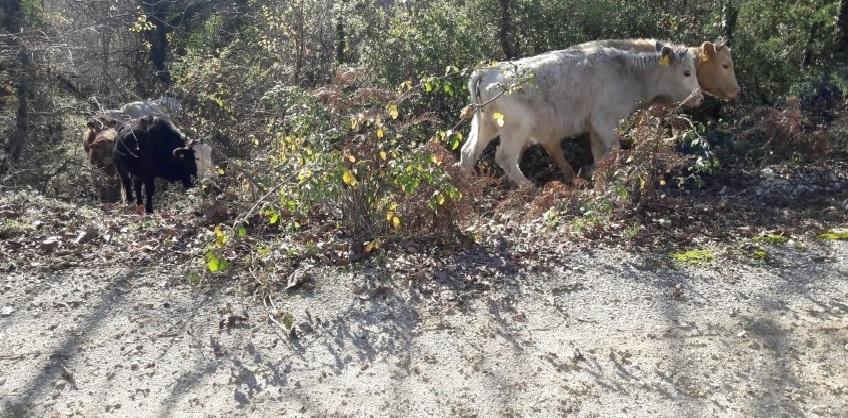 Αγωγές και κατάθεση μήνυσης για τα ανεπιτήρητα ζώα
