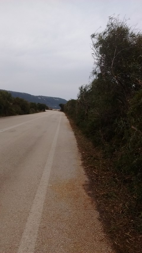 Ο Δήμος Λευκάδας για το κλάδεμα των δένδρων στη Γύρα