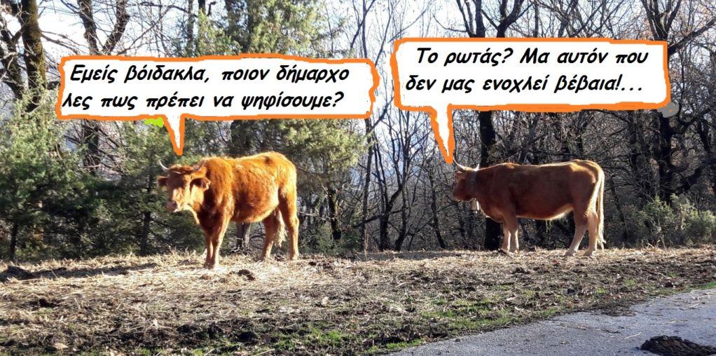 Τι θα ψηφίσουν τα ζώα στις εκλογές!