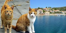 64χρονος κατηγορείται για φόλα σε 7 γάτες στον Καστό
