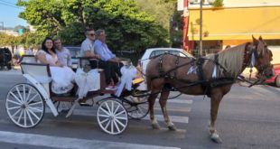 Η νύφη πήγε στην εκκλησία με άμαξα κι οι συμπέθεροι με άλογα!
