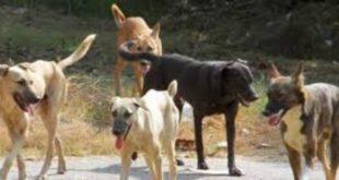 Απορρίφθηκε η προσφυγή για το καταφύγιο σκύλων