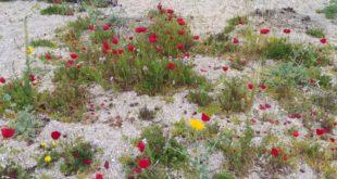 Η φωτο της ημέρας Έργα τέχνης στην άμμο!