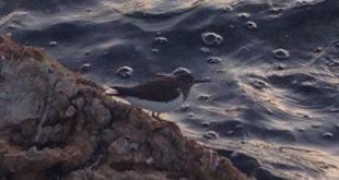 Η ορνιθοπανίδα της Λιμνοθάλασσας της Λευκάδας