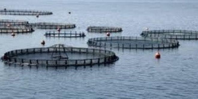 Η Λαϊκή Συσπείρωση για τις υδατοκαλλιέργειες Καλάμου
