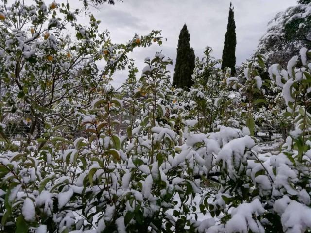 Η φωτο της ημέρας: Χιονισμένη θέα κι ομορφιά!