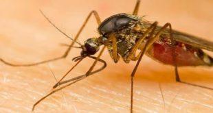 ΕΟΔΥ: Προφυλαχθείτε από τα κουνούπια και τον ιό του Δ. Νείλου