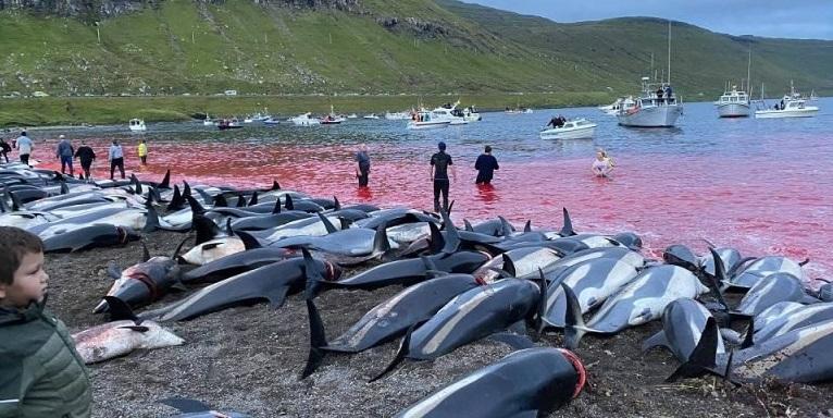 Η σφαγή των δελφινιών!