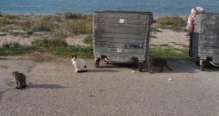 Παράπονα ενός Ολλανδού στο Δήμαρχο για τις αδέσποτες γάτες